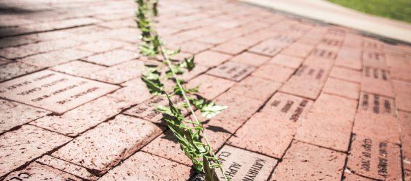William Woods alumni bricks