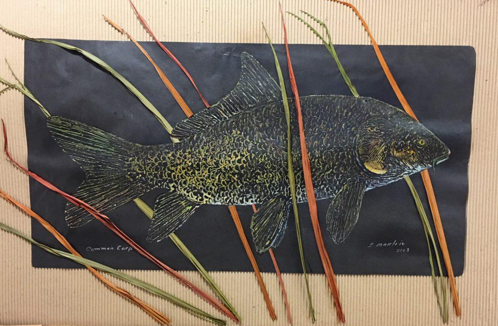terry martin common carp