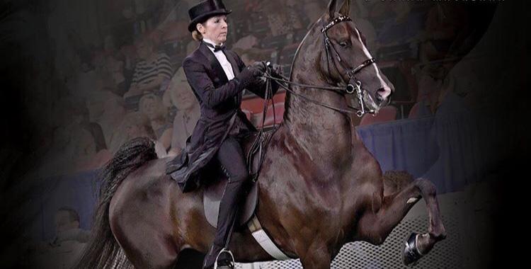 Sarah MacKenna riding a Vonderschmitt horse