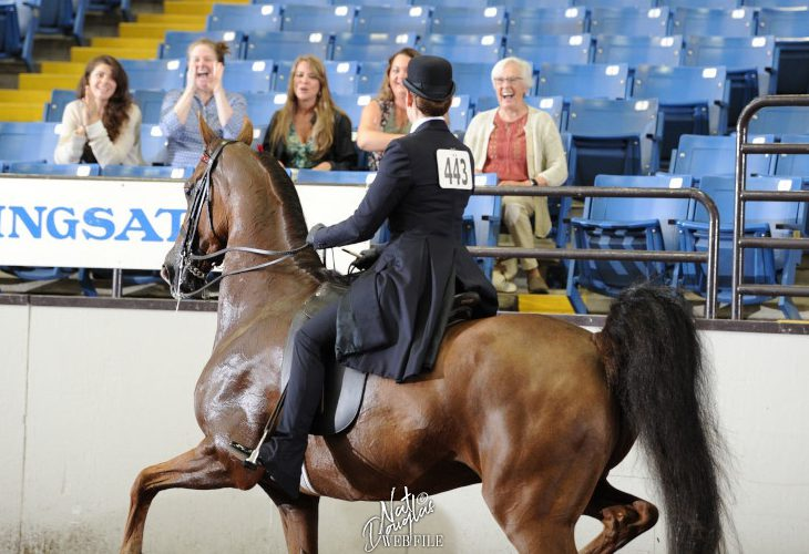 Sarah Track at the Missouri State Fair with other Equestrian Science Faculty in the stands
