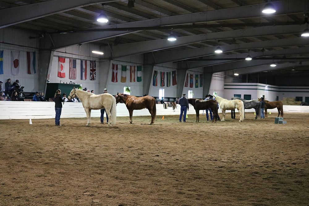 Photo of a line-up of horses at the MFTHBA clinic